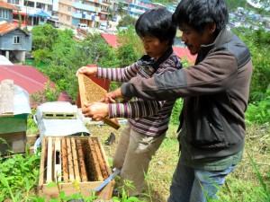 BeeKAS (Sagada): Checking the hive